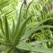Aloe Vera, una pianta mille proprietà