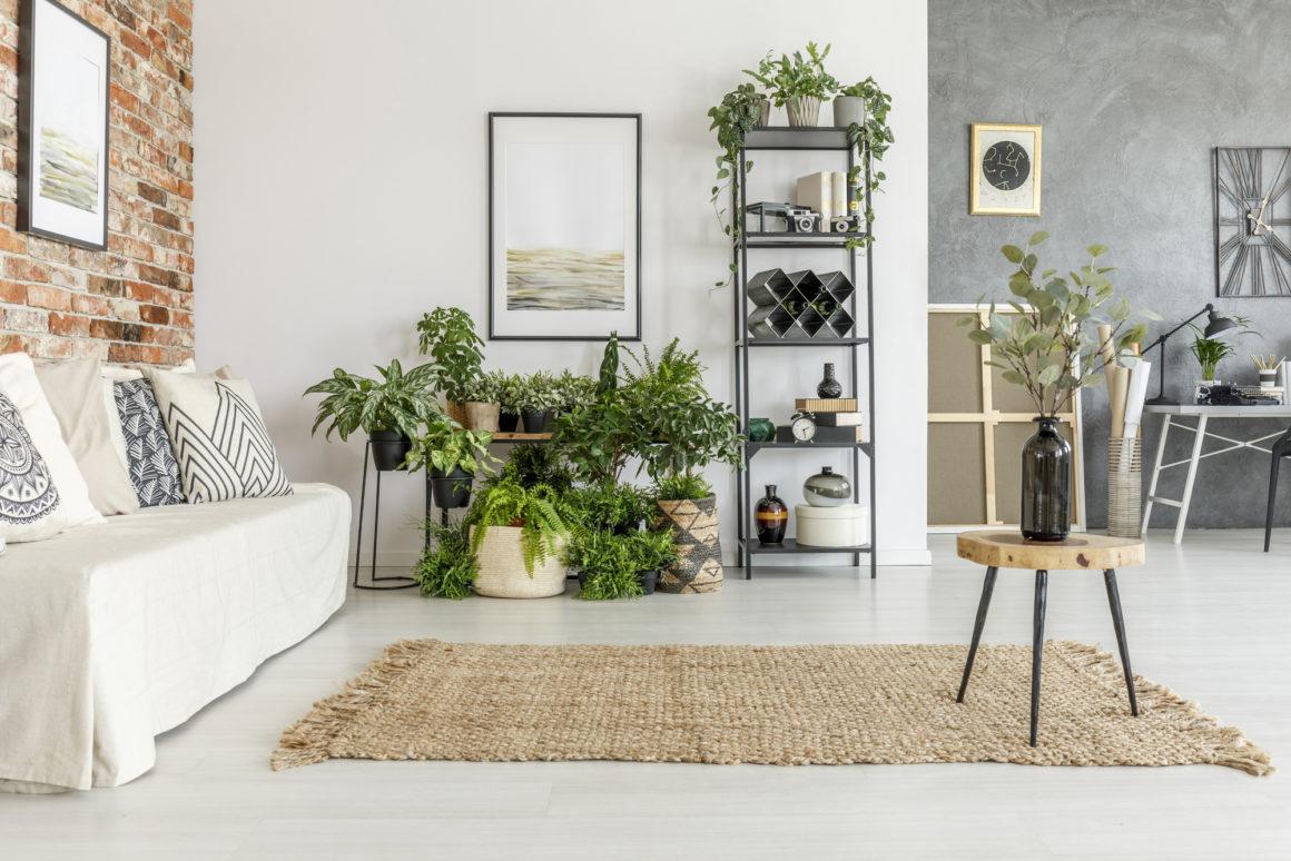 Consigli Per La Casa le piante in appartamento: 8 consigli fondamentali per il