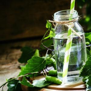 La linfa di betulla ci aiuta a rinascere dopo l'inverno