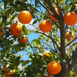 Le arance, dei veri tesori