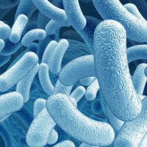 Microorganismi: i custodi della vita