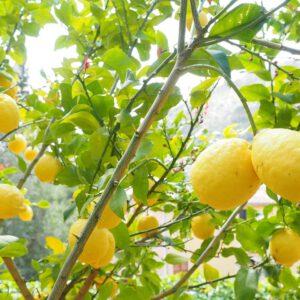 Curiamoci con il limone, un vero e proprio farmaco naturale