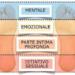 Effetto Placebo o nocebo: seconda parte